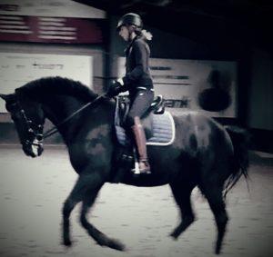 dressuur-art-of-riding